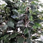 ficus-artificiel-exotica-buisson-2