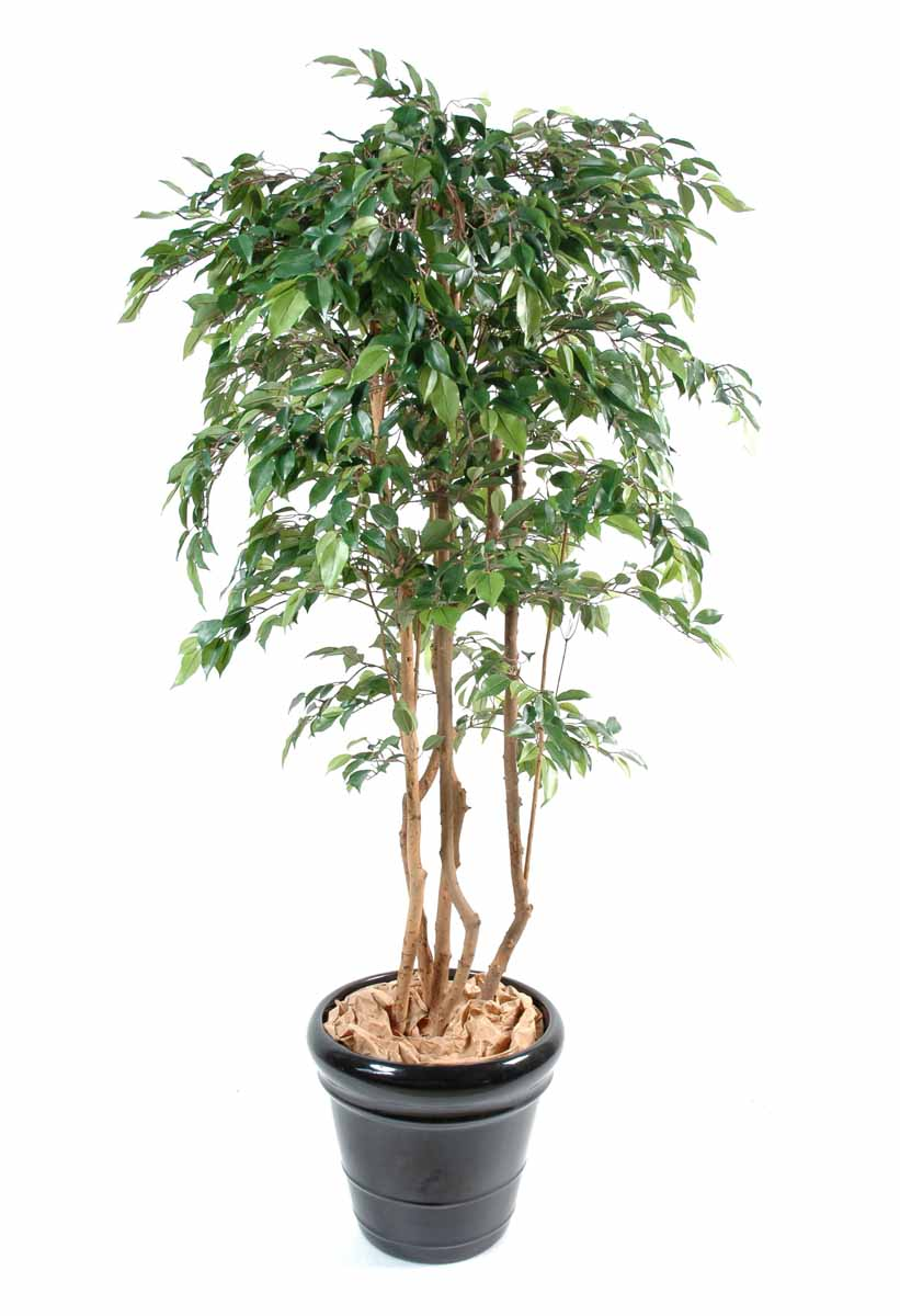 ficus-artificiel-multitree-natasja-1