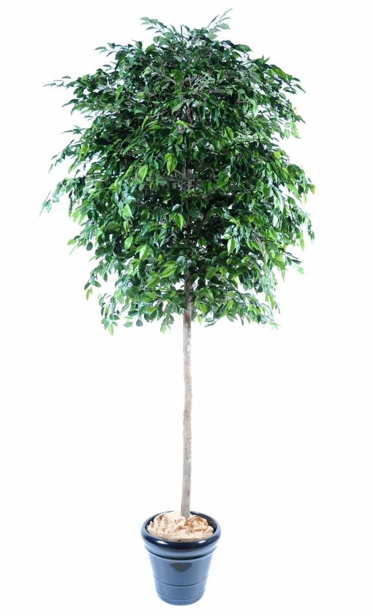 ficus-artificiel-natasja-tree-1