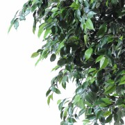 ficus-artificiel-natasja-tree-4