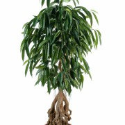 ficus-artificiel-root-longifolia-1