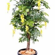 glycine-multi-tree-1