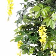 glycine-multi-tree-3