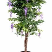 glycine-multi-tree-4