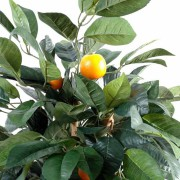 oranger-2
