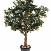 oranger-arbre-1