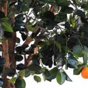 oranger-arbre-3