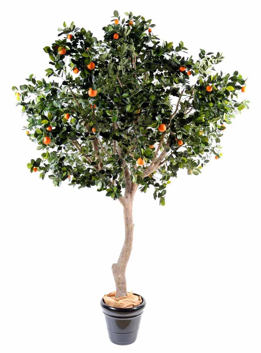 oranger-arbre-large-1
