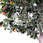 oranger-arbre-large-2