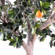 oranger-arbre-large-3