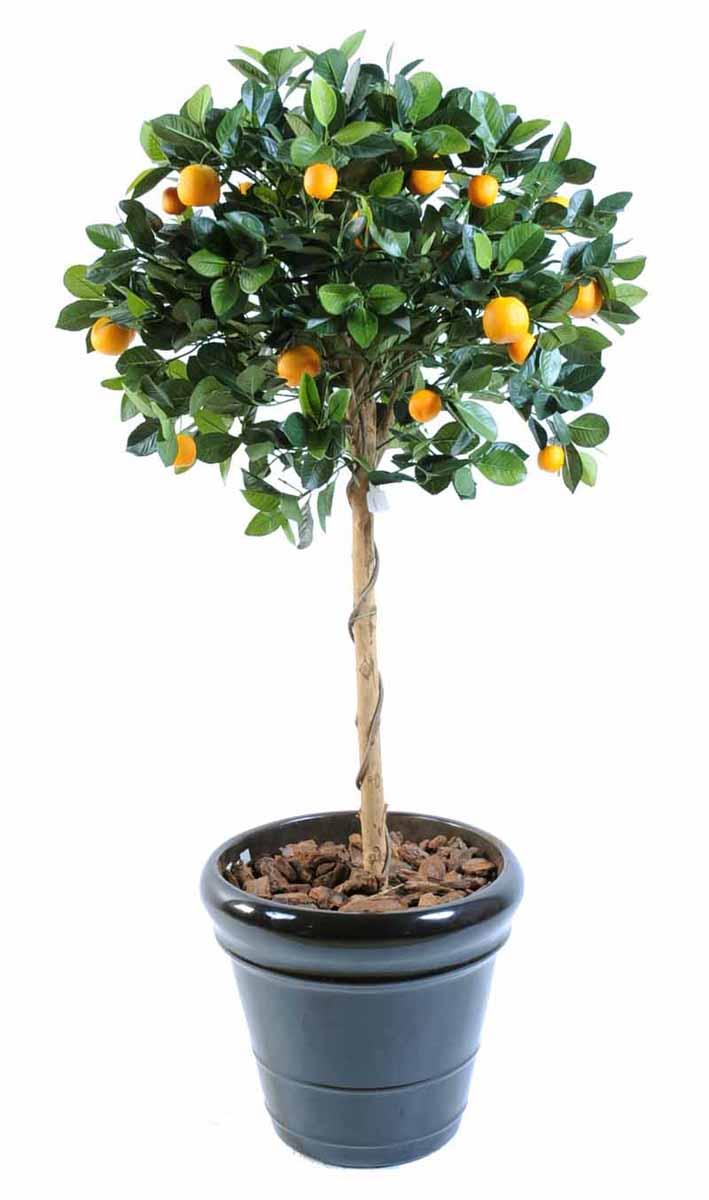 oranger-boule-1