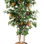 oranger-new-1