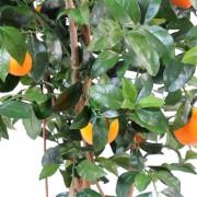 oranger-new-2