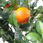 oranger-new-3