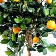 orangerboule-2