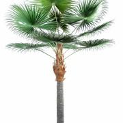 palmier-artifciel-camerus-1