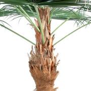 palmier-artifciel-camerus-2