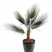 palmier-artificiel-washingtonia-1