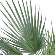 palmier-artificiel-washingtonia-5