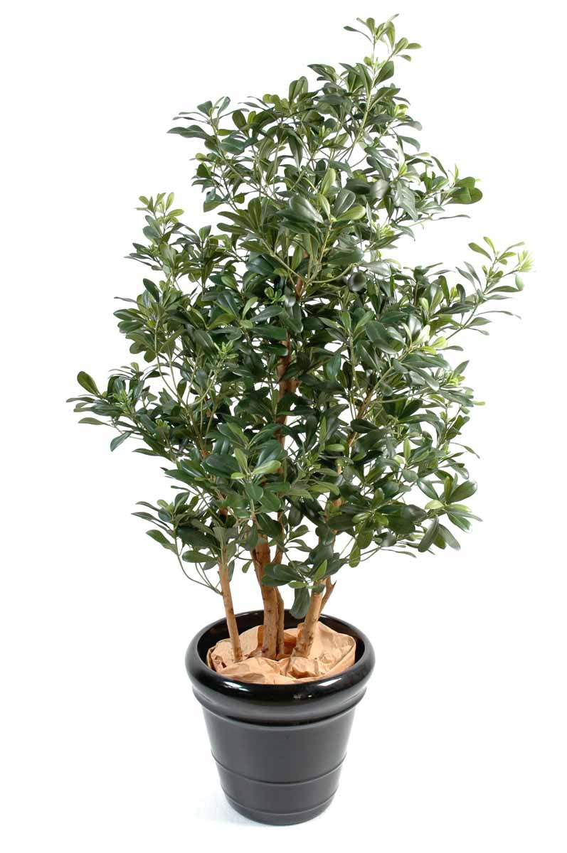 pittosporum-artificiel-1