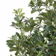 pittosporum-artificiel-3