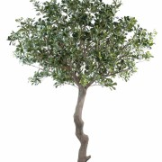 pittosporum-artificiel-arbre-1