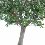pittosporum-artificiel-arbre-2