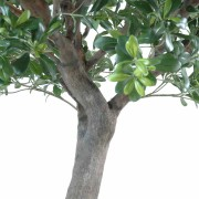 pittosporum-artificiel-arbre-3
