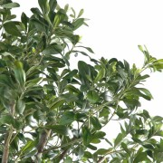pittosporum-artificiel-arbre-5