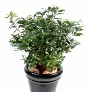 pittosporum-artificiel-buisson-1