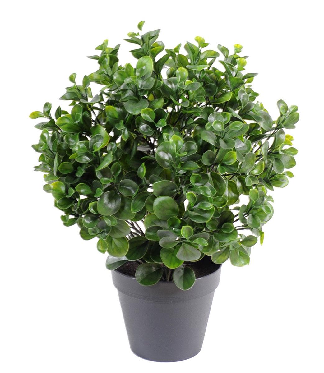 plante-artificelle-peperomia-plast-buisson-1