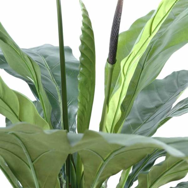 Anthurium jungle king decobac for Plante jungle