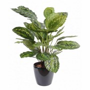 plante-artificielle-calathea-roseopicta-vert-1