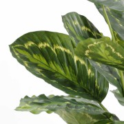 plante-artificielle-calathea-roseopicta-vert-2