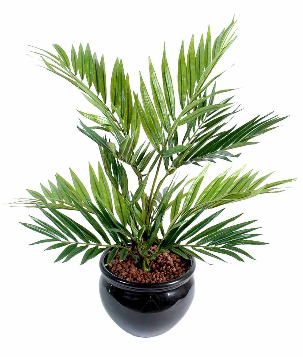plante-artificielle-chamaeodorea-1