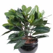plante-artificielle-cyathistipula-1