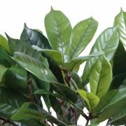 plante-artificielle-cyathistipula-2
