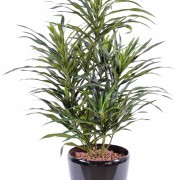 plante-artificielle-dracaena-anita-1