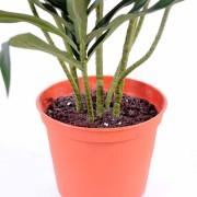 plante-artificielle-dracaena-anita-3