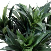 plante-artificielle-dracena-fragans-2