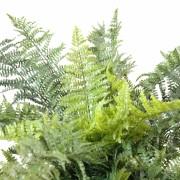 plantes-artificielle-fougere-plast-1.jpg