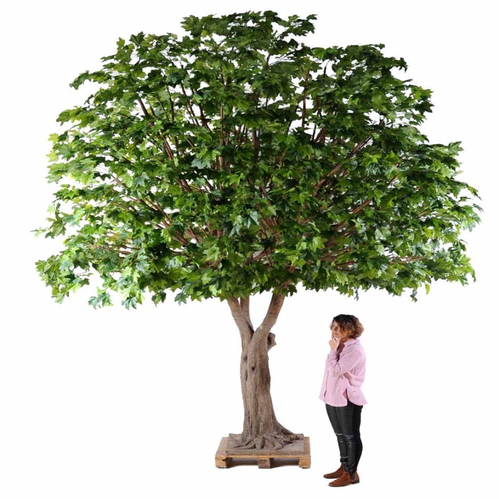 platane arbre