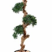podocarpus-artificiel-nuage--1