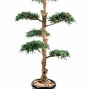 podocarpus-artificiel-nuage-large-1