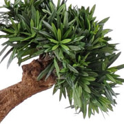 podocarpus-artificiel-tree-5