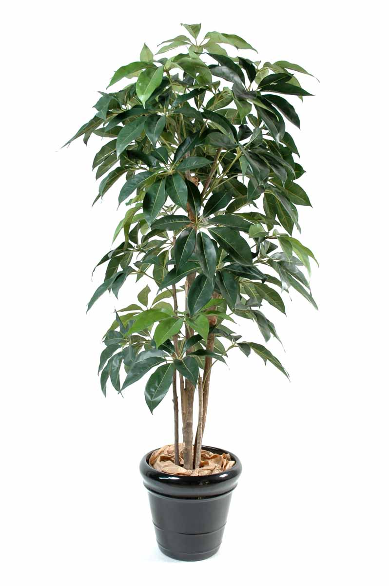 schefflera-artificiel-amata