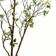 feuillage-artificiel-ficus-growth-3