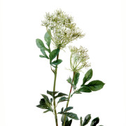 fleur-artificielle-ammi-majus-blanc-2