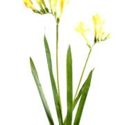 fleur-artificielle-fresia-jaune-2