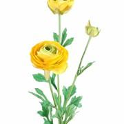 fleur-artificielle-renoncule-jaune-1